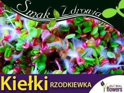 Nasiona na Kiełki - Rzodkiewka 500g opakowanie XXL