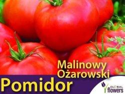 Pomidor MALINOWY OŻAROWSKI  (Solanum lycopersicum) nasiona 1g