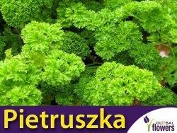 Pietruszka naciowa kędzierzawa 'Moss Curled 2' (Petroselinum crispum) XXL 500 g