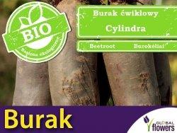 BIO Burak ćwikłowy CYLINDRA nasiona ekologiczne 10g