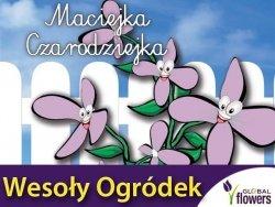 Maciejka dwuroga różowolawendowa - Maciejka Czarodziejka Wesoły ogródek