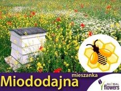 Kwietna łąka Mieszanka roślin miododajnych BEE'S UNIVERSE nasiona XXL 500g