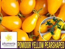 Pomidor YELLOW PEARSHAPED (Lycopersicon Esculentum) nasiona 0,2g