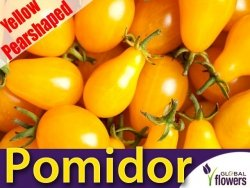 Pomidor Yellow Pearshaped (Lycopersicon Esculentum) pomidor gruszkowy żółty