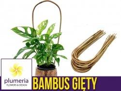 Bambus gięty łuk - podpora do roślin 60 cm x 8/10 mm - 1 szt.