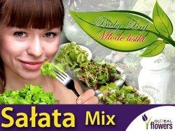 Baby Leaf  (Lactuca) Sałata mieszanka odmian 1,5g