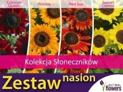 Kolekcja Słoneczników (zestaw 4 odmian) nasiona