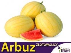 Arbuz Złoto Wolicy Kawon Żółty (Citrullus vulgaris)