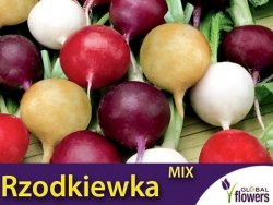 Rzodkiewka, mieszanka kolorów i odmian 10g