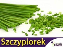 Szczypiorek MEDIUM LEAF (Allium schoenoprasum) nasiona XL 100g