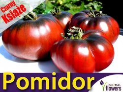 Pomidor 'Czarny Książe' Noire de Crimee (Lycopersicon Esculentum) 0,1g