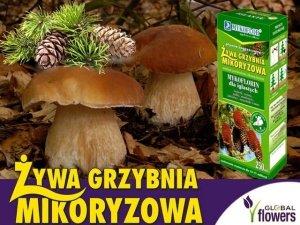 Grzybnia Grzyby Leśne Drzew Iglastych Mikoryza 250ml