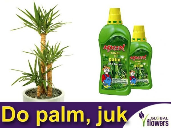 Agrecol Nawóz do palm, juk i dracen 0,35L