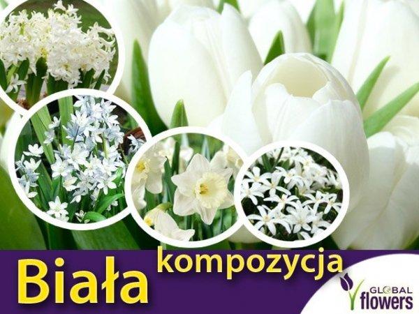 biała kompozycja roślin cebulowych, biały tulipan