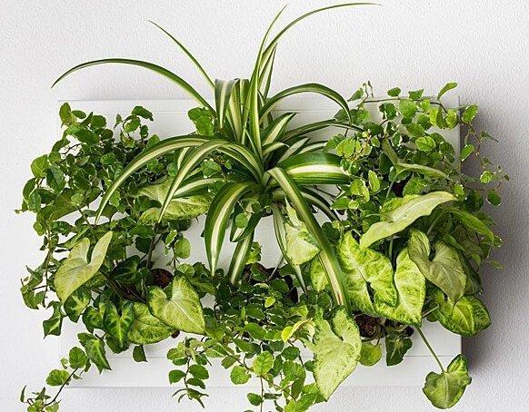 zielistek ogród wertykalny