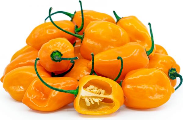 Habanero Orange nasiona ostrej papryki