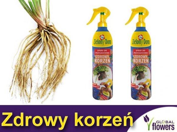 Spray do przesadzania roślin ZDROWY KORZEŃ