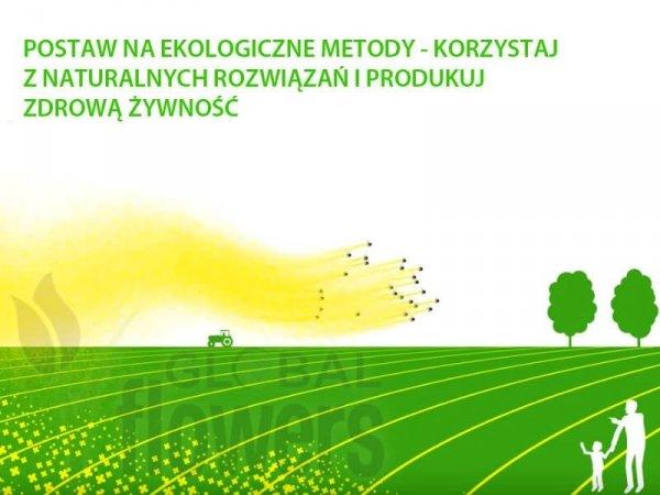 ekologiczne uprawy zapylanie w ogrodzie