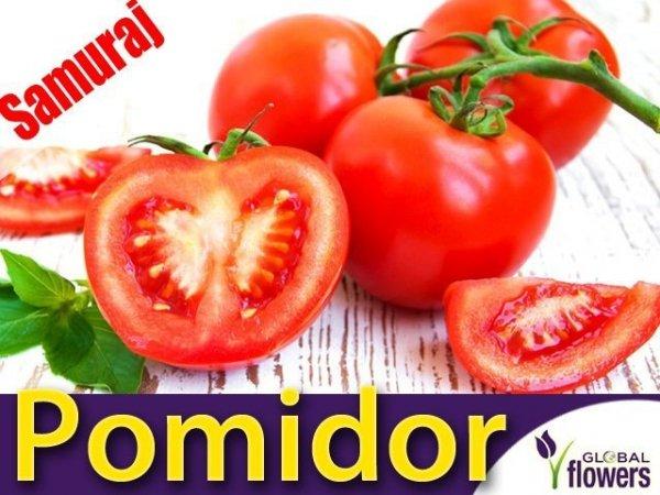 Pomidor karłowy Samuraj (Lycopersicon Esculentum)