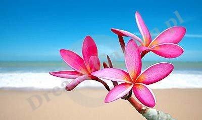 Plumeria Hawajskie Kwiaty (Plumeria Tourn. ex L.)