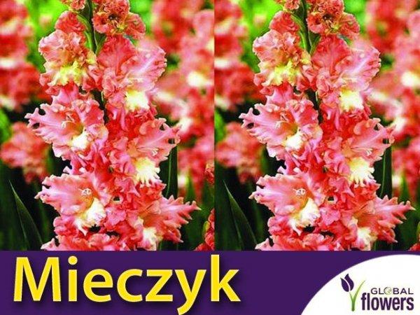 Mieczyk wielokwiatowy (Gladiolus) Frizzled Coral Lace