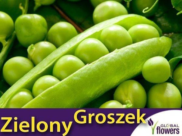 Groch Łuskowy - zielony groszek- Telefon (Pisum sativum) XXL 1000g