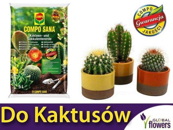 profesjonalne podłoże do kaktusów i sukulentów