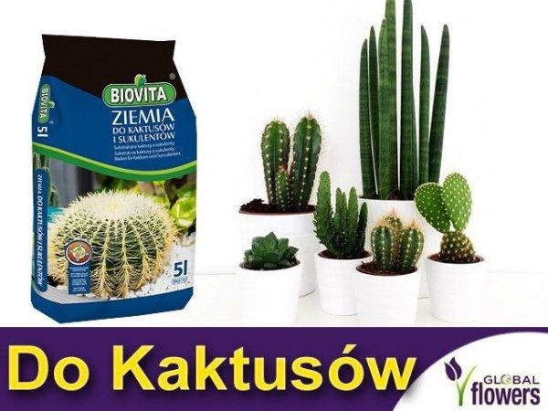 Ziemia do kaktusów i sukulentów, gdzie kupić ziemia do kaktusów