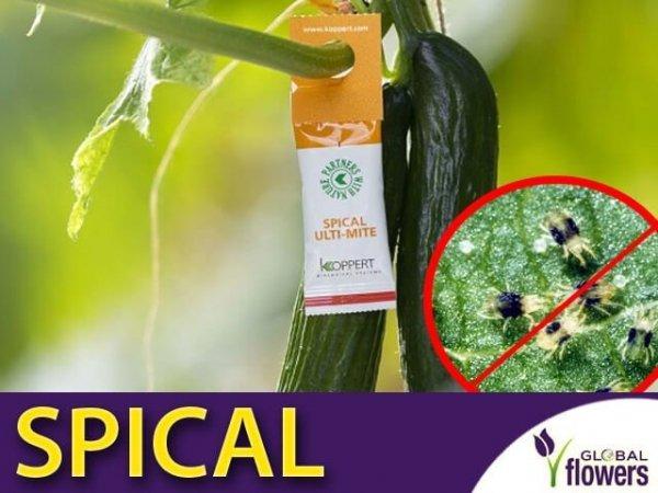 SPICAL Ulti-Mite na przędziorka do roślin domowych i wszelkich upraw 10 szt