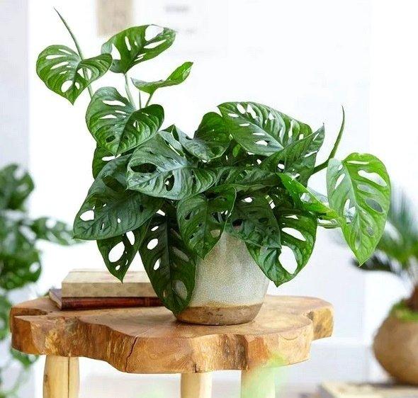 Rośliny nowoczesne wnętrza