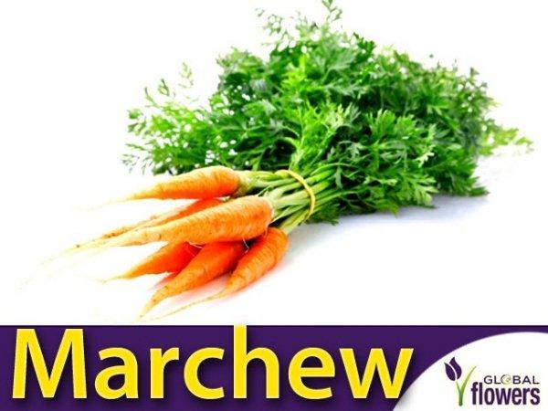 Marchew Flakkese2 Późna (Daucus carota) L 50g