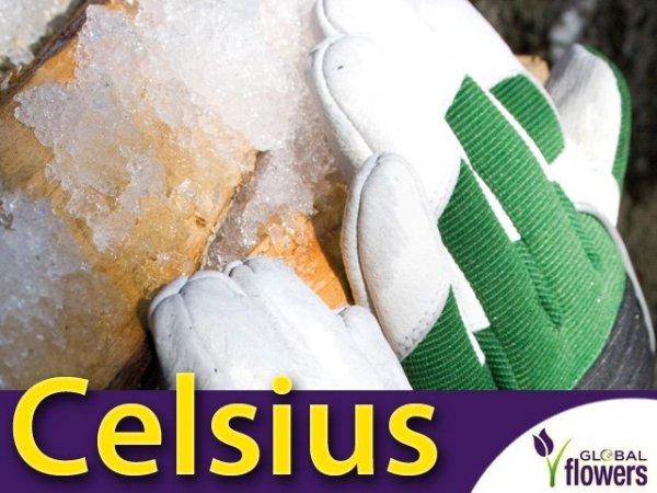 Profesjonalne Rękawice Ogrodnicze - Celsius - do zimowych prac.