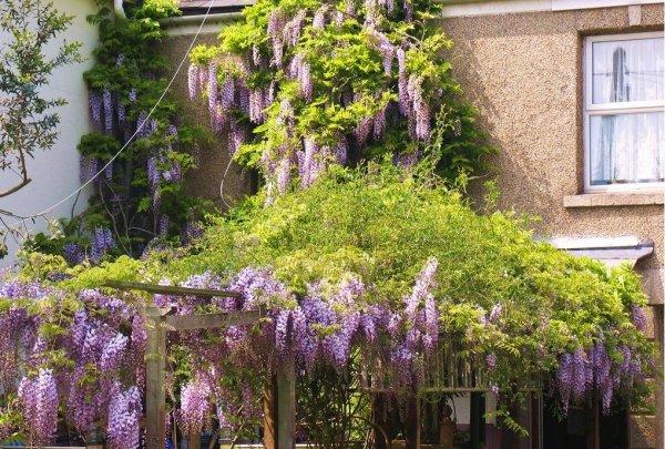 wisteria sklep