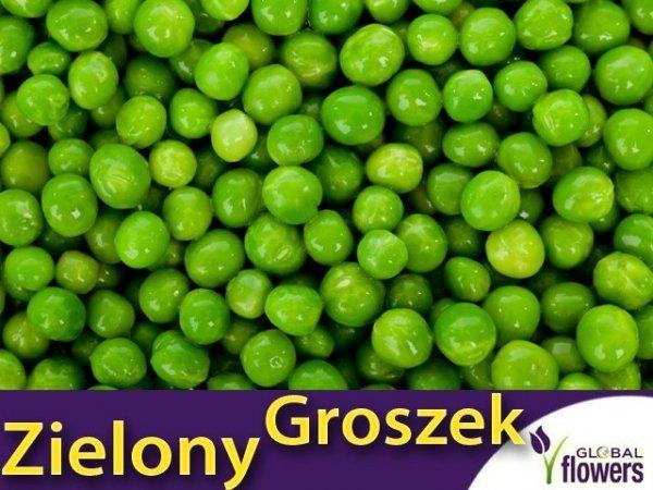 Groch Łuskowy - zielony groszek- Sześciotygodniowy (Pisum sativum) XXL 500g
