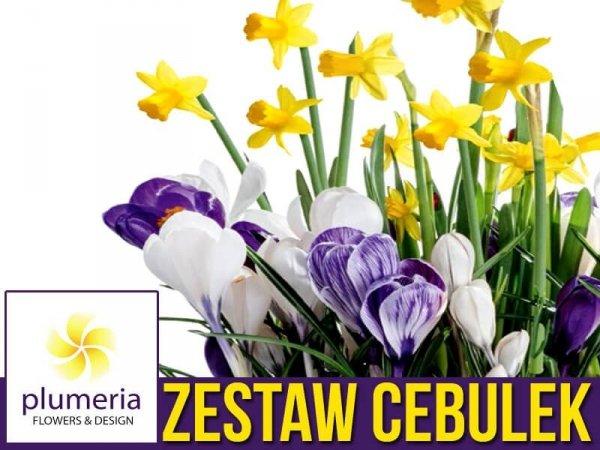 Kompozycja POWIEW WIOSNY Zestaw Cebulek