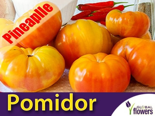 Pomidor Beefsteak Pineapple (Lycopersicon Esculentum)
