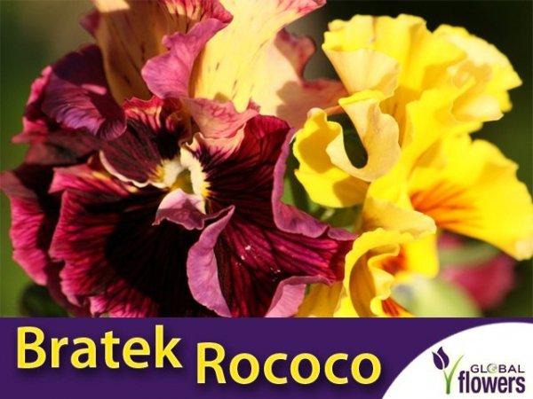 Bratek Rococo mieszanka (Viola ×wittrockiana Gams) 0,4g