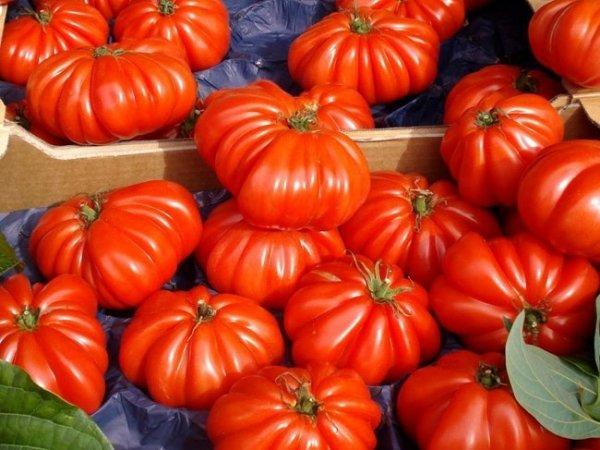 Pomidory Marmande na kanapki