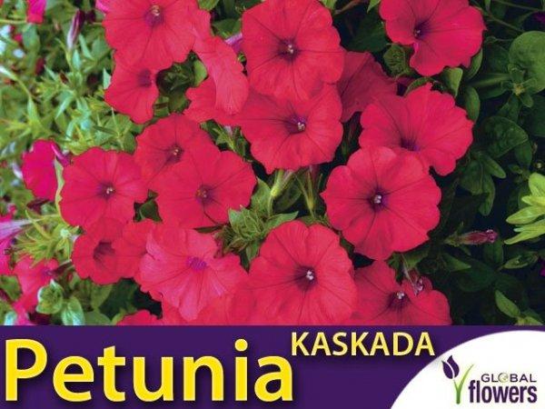 Petunia ogrodowa Kaskada czerwono - purpurowa  (Petunia x hybrida pendula) 0,02g LUX