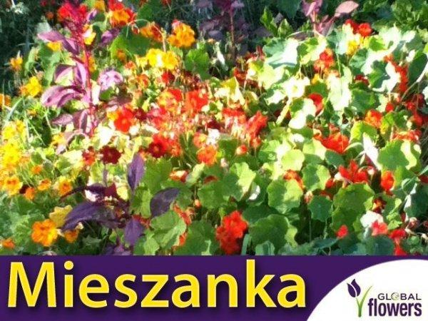 Mieszanka jednorocznych roślin pnących