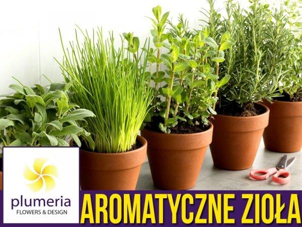 Wyjątkowo aromatyczne zioła - zestaw 6 odmian ziół nasiona
