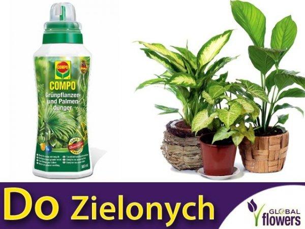 COMPO Nawóz do roślin zielonych 500 ml