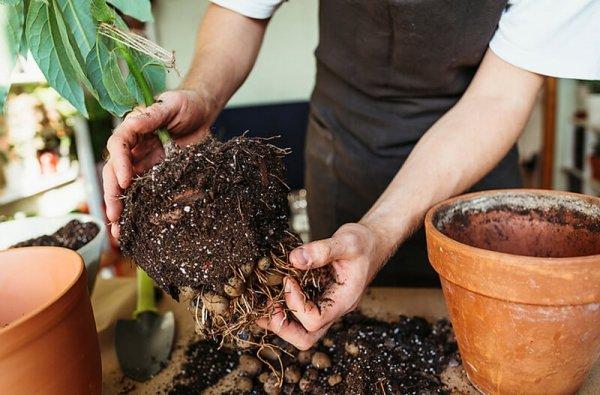 uprawa roslin doniczkowych