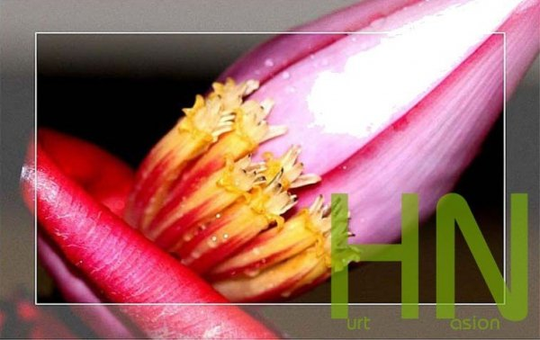 Oryginalne kwiaty banana