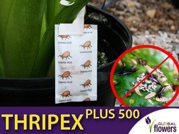 thripex plus 500 drapieżny roztocz na szkodniki, saszetki