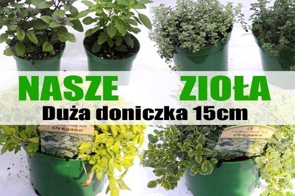 sadzonki ziół