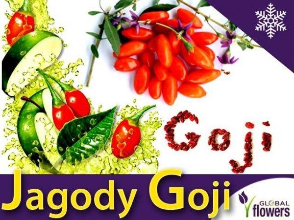 Jagody Goji (Lycuim chinensis) Sadzonka