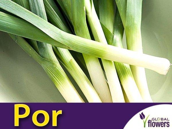 Por późny Bartek (Allium porrum) 1g