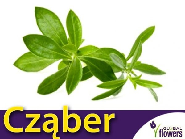 Cząber ogrodowy  (Satureja hortensis) 1g