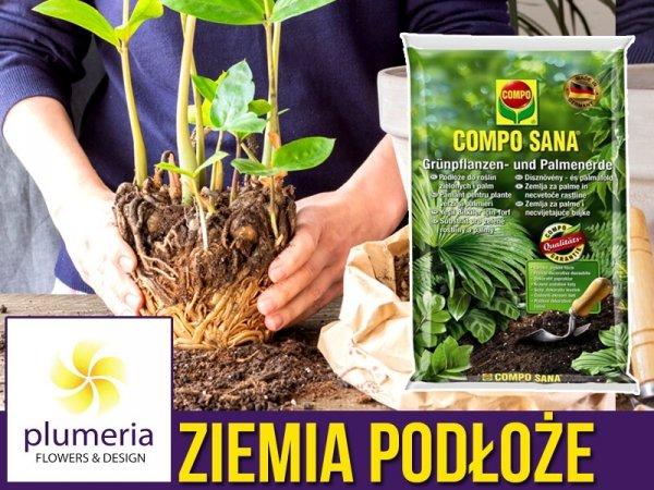 odpowiednie podłoże do roślin domowych
